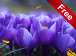 Crocus - Windows 10 Nature Screensavers