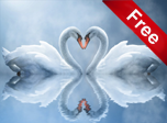 Swan Love Screensaver - Windows 10 Nature Screensavers
